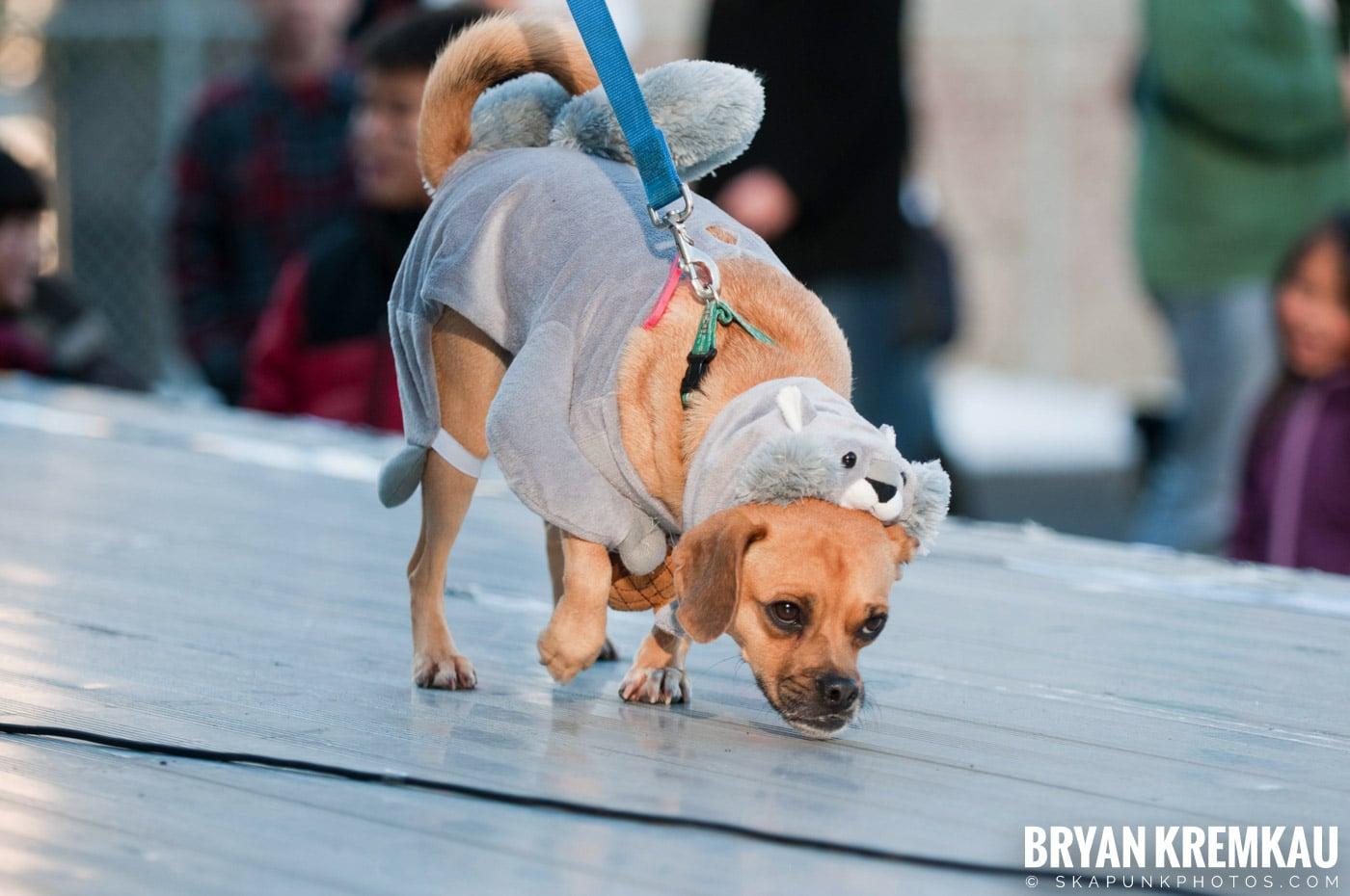 Paulus Hook Halloween Pet Parade 2011 @ Jersey City, NJ - 10.30.11 (21)