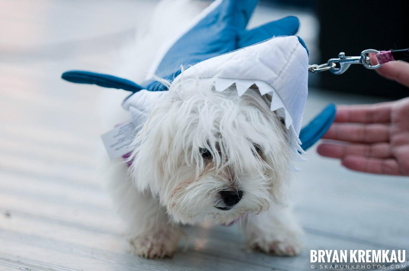 Paulus Hook Halloween Pet Parade 2011 @ Jersey City, NJ - 10.30.11 (16)