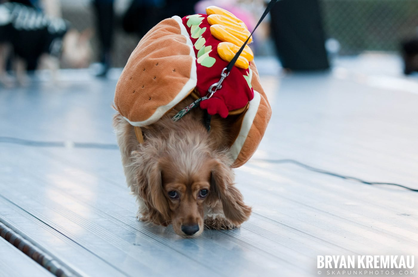 Paulus Hook Halloween Pet Parade 2011 @ Jersey City, NJ - 10.30.11 (15)