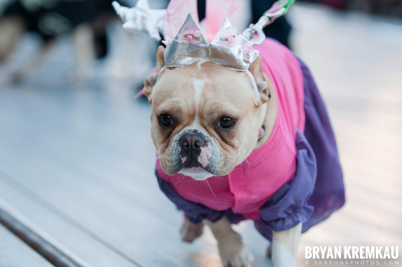 Paulus Hook Halloween Pet Parade 2011 @ Jersey City, NJ - 10.30.11 (14)