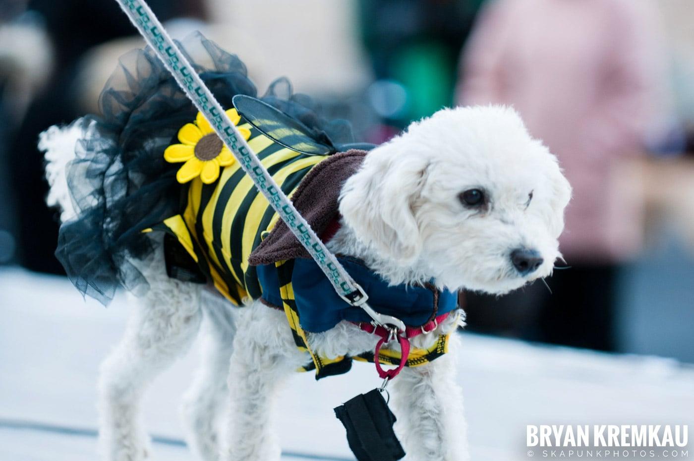 Paulus Hook Halloween Pet Parade 2011 @ Jersey City, NJ - 10.30.11 (11)