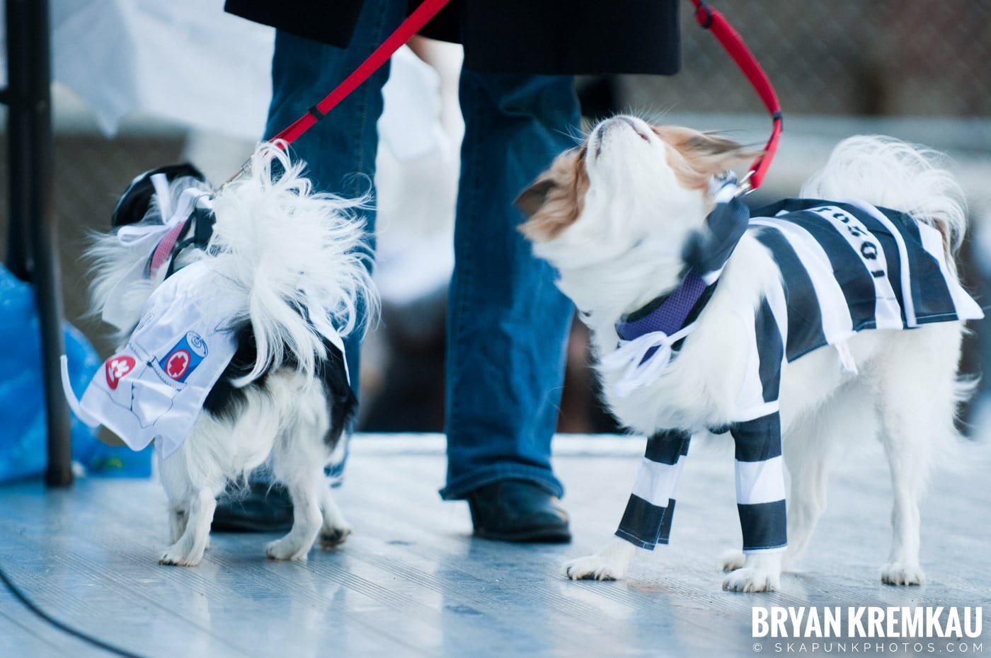Paulus Hook Halloween Pet Parade 2011 @ Jersey City, NJ - 10.30.11 (9)