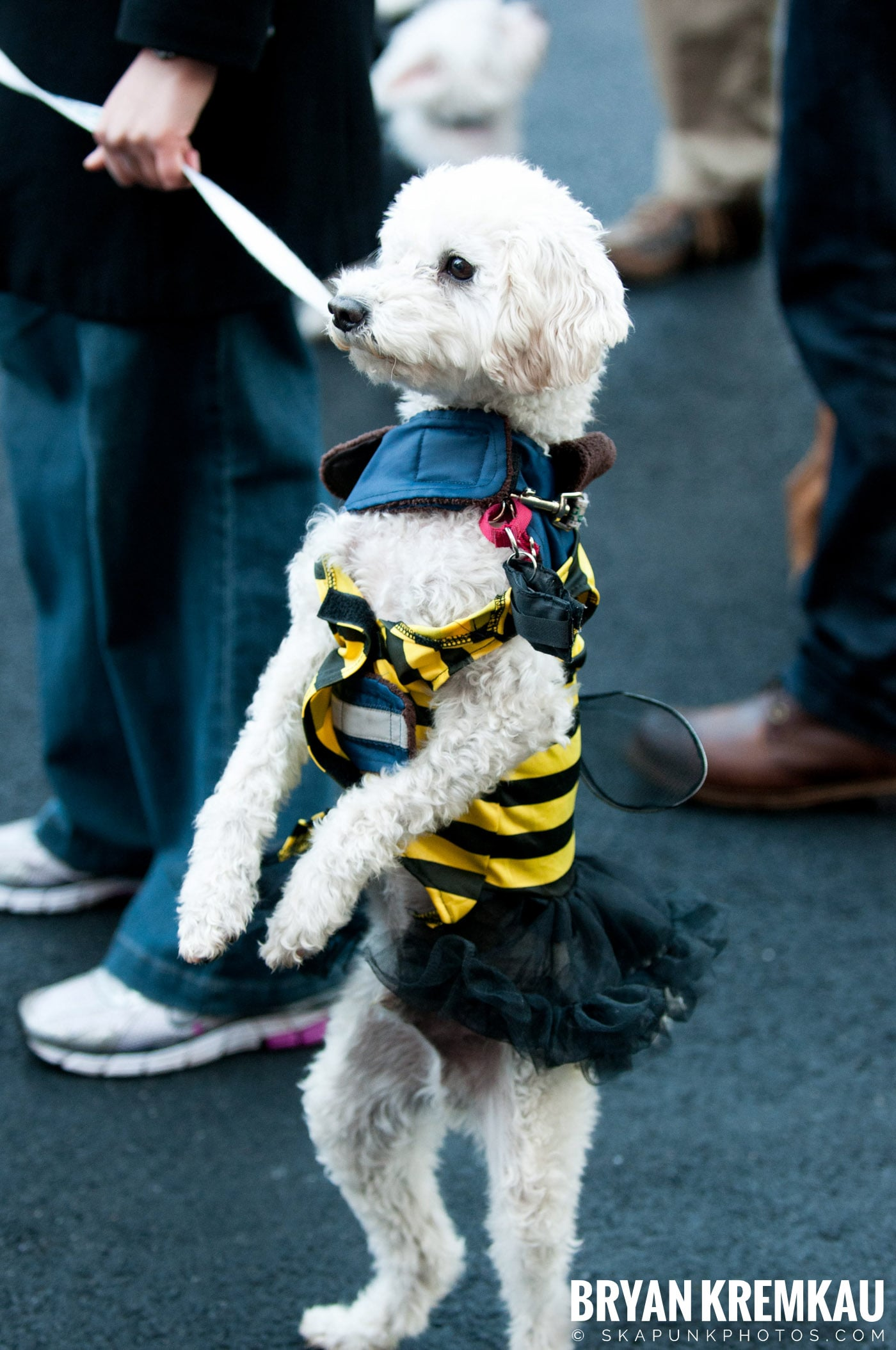 Paulus Hook Halloween Pet Parade 2011 @ Jersey City, NJ - 10.30.11 (8)