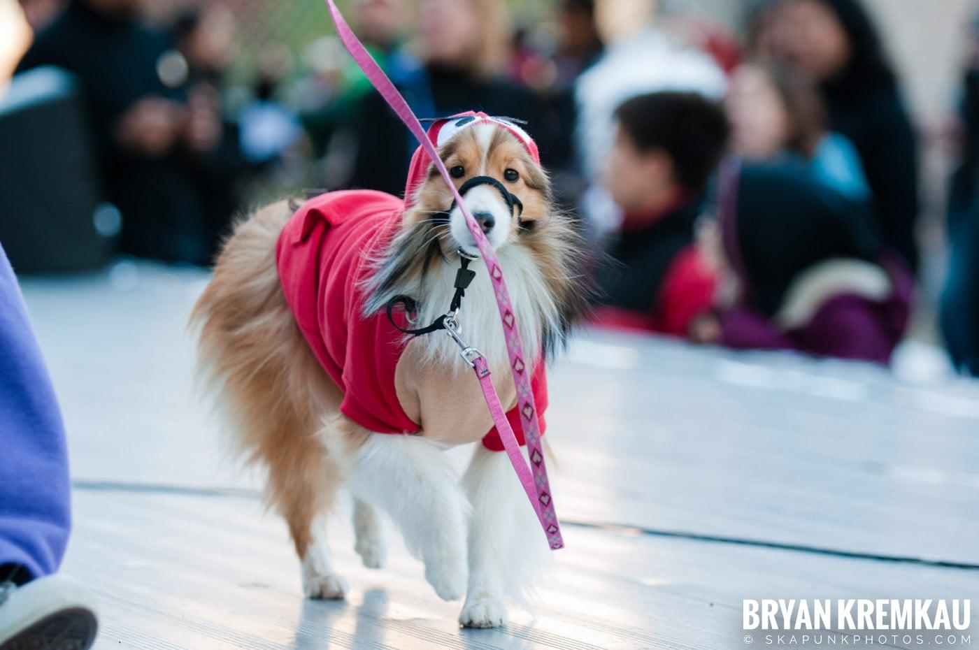 Paulus Hook Halloween Pet Parade 2011 @ Jersey City, NJ - 10.30.11 (7)