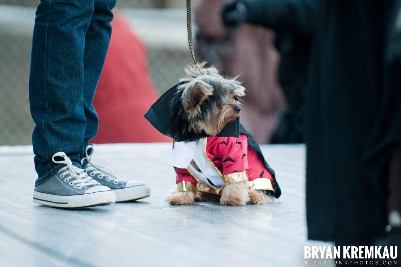 Paulus Hook Halloween Pet Parade 2011 @ Jersey City, NJ - 10.30.11 (4)