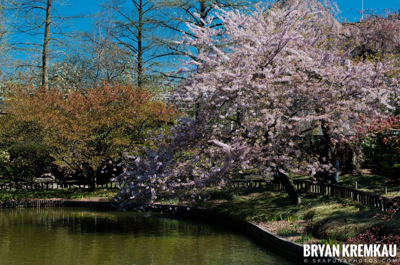 Brooklyn Botanic Garden & Prospect Park Zoo @ Brooklyn, NY - 4.6.12 (97)