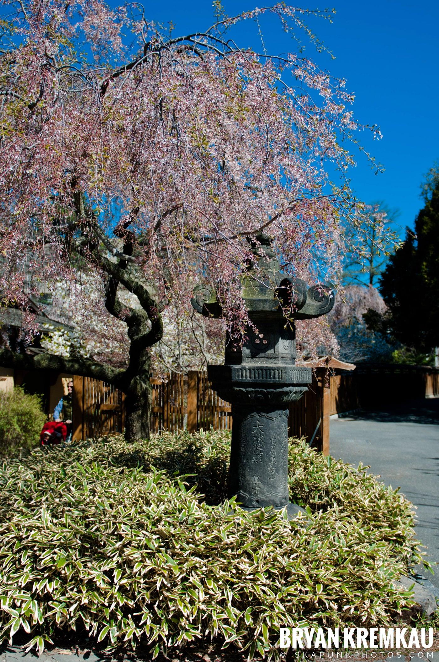 Brooklyn Botanic Garden & Prospect Park Zoo @ Brooklyn, NY - 4.6.12 (92)