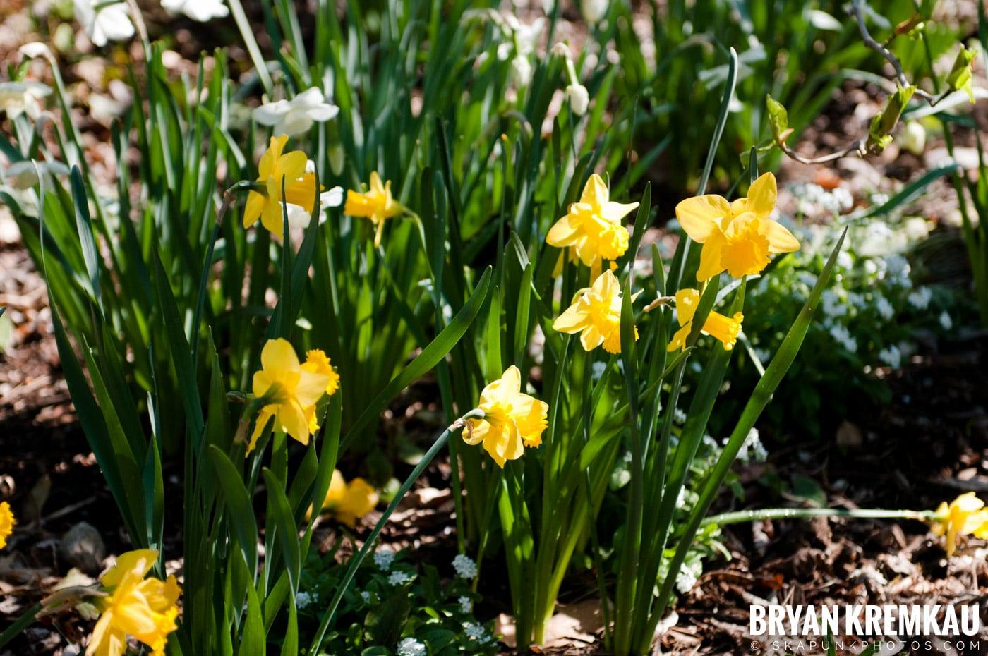 Brooklyn Botanic Garden & Prospect Park Zoo @ Brooklyn, NY - 4.6.12 (87)