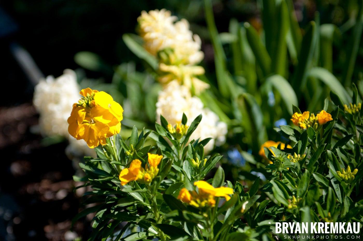 Brooklyn Botanic Garden & Prospect Park Zoo @ Brooklyn, NY - 4.6.12 (82)