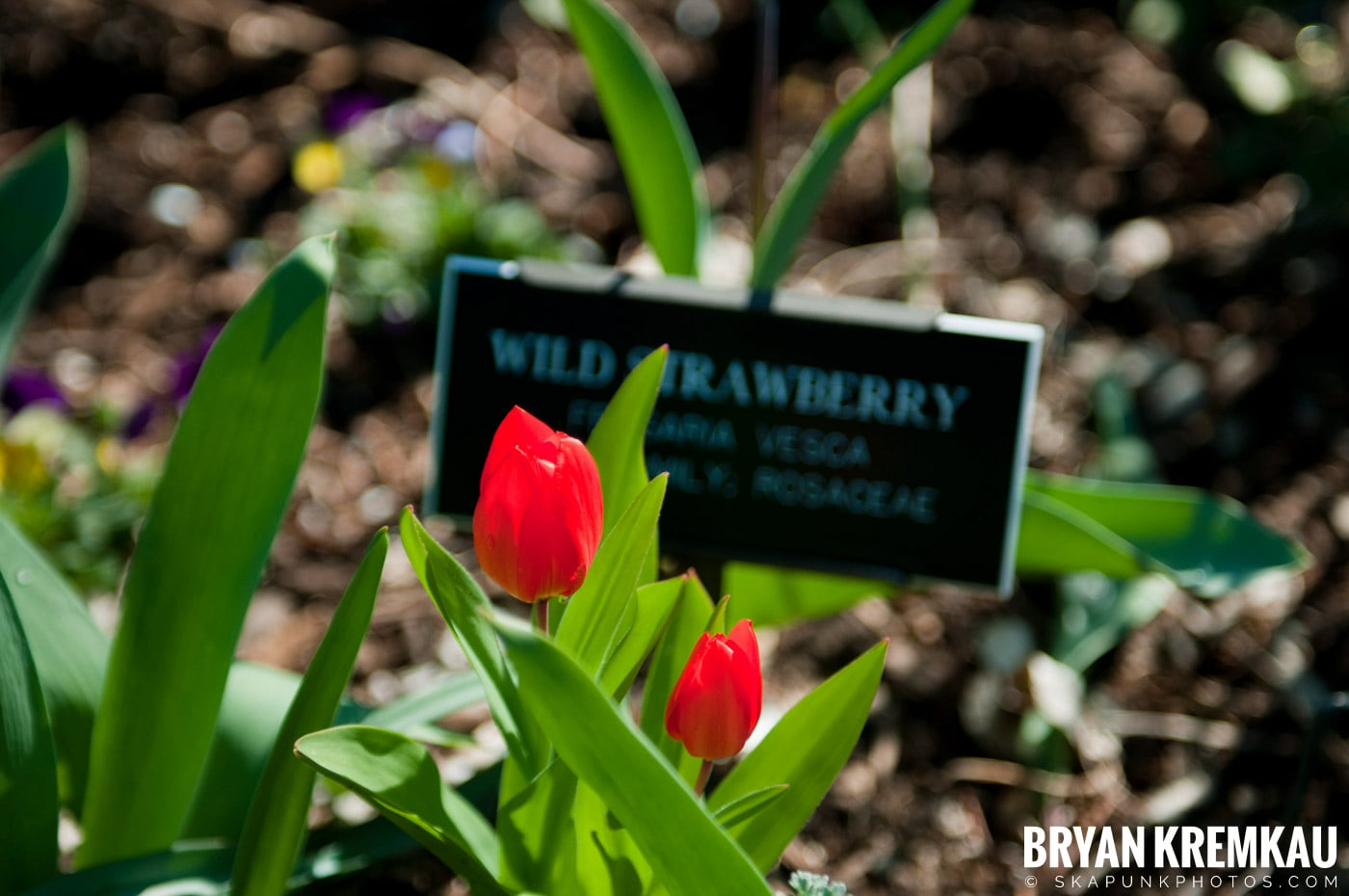 Brooklyn Botanic Garden & Prospect Park Zoo @ Brooklyn, NY - 4.6.12 (81)
