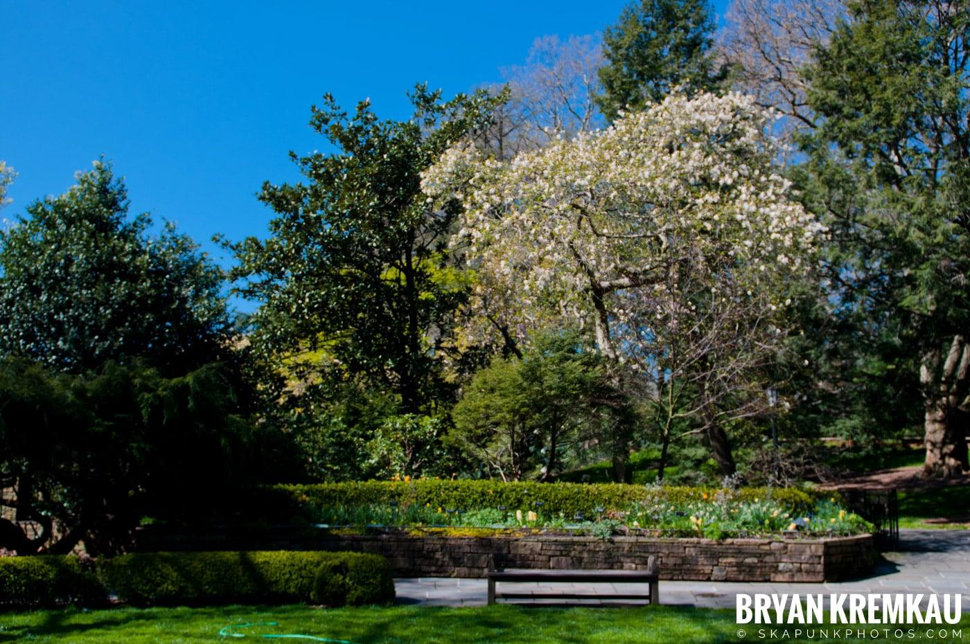 Brooklyn Botanic Garden & Prospect Park Zoo @ Brooklyn, NY - 4.6.12 (80)