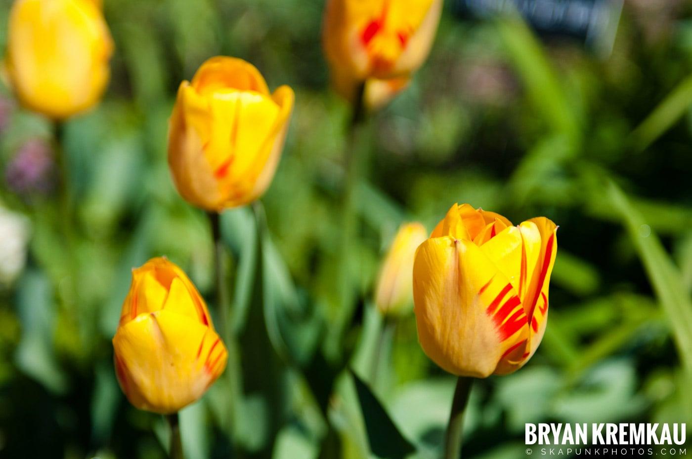 Brooklyn Botanic Garden & Prospect Park Zoo @ Brooklyn, NY - 4.6.12 (74)