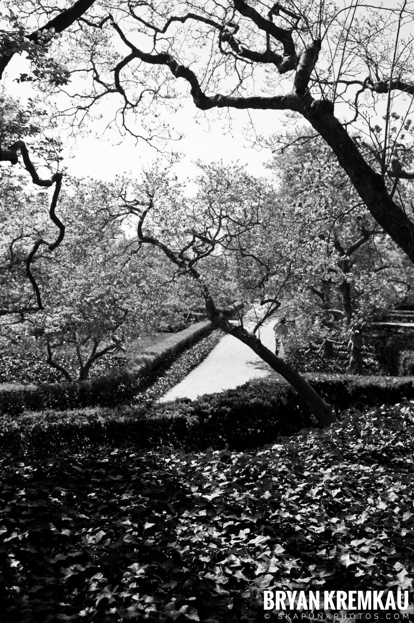Brooklyn Botanic Garden & Prospect Park Zoo @ Brooklyn, NY - 4.6.12 (70)