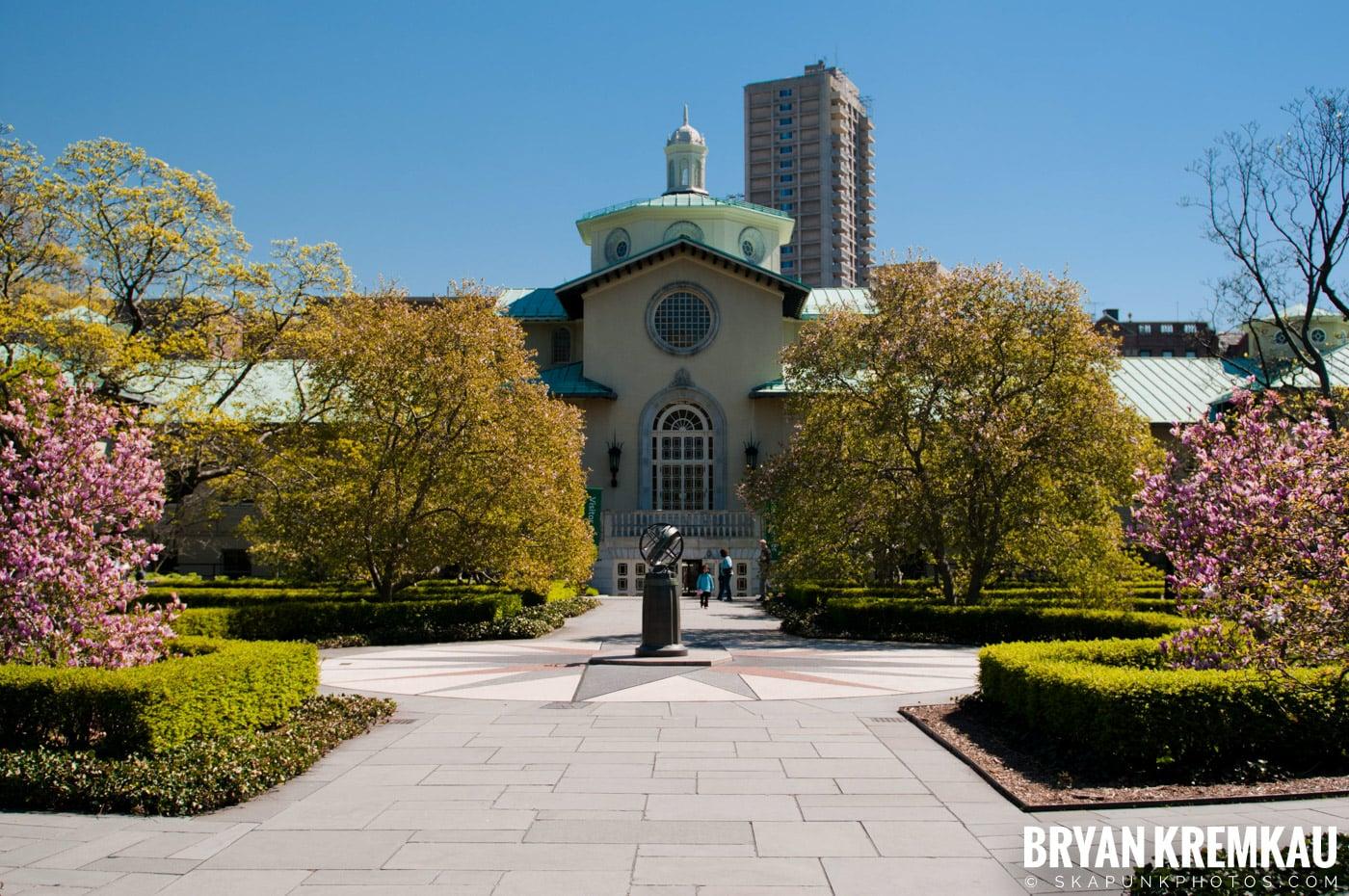 Brooklyn Botanic Garden & Prospect Park Zoo @ Brooklyn, NY - 4.6.12 (67)