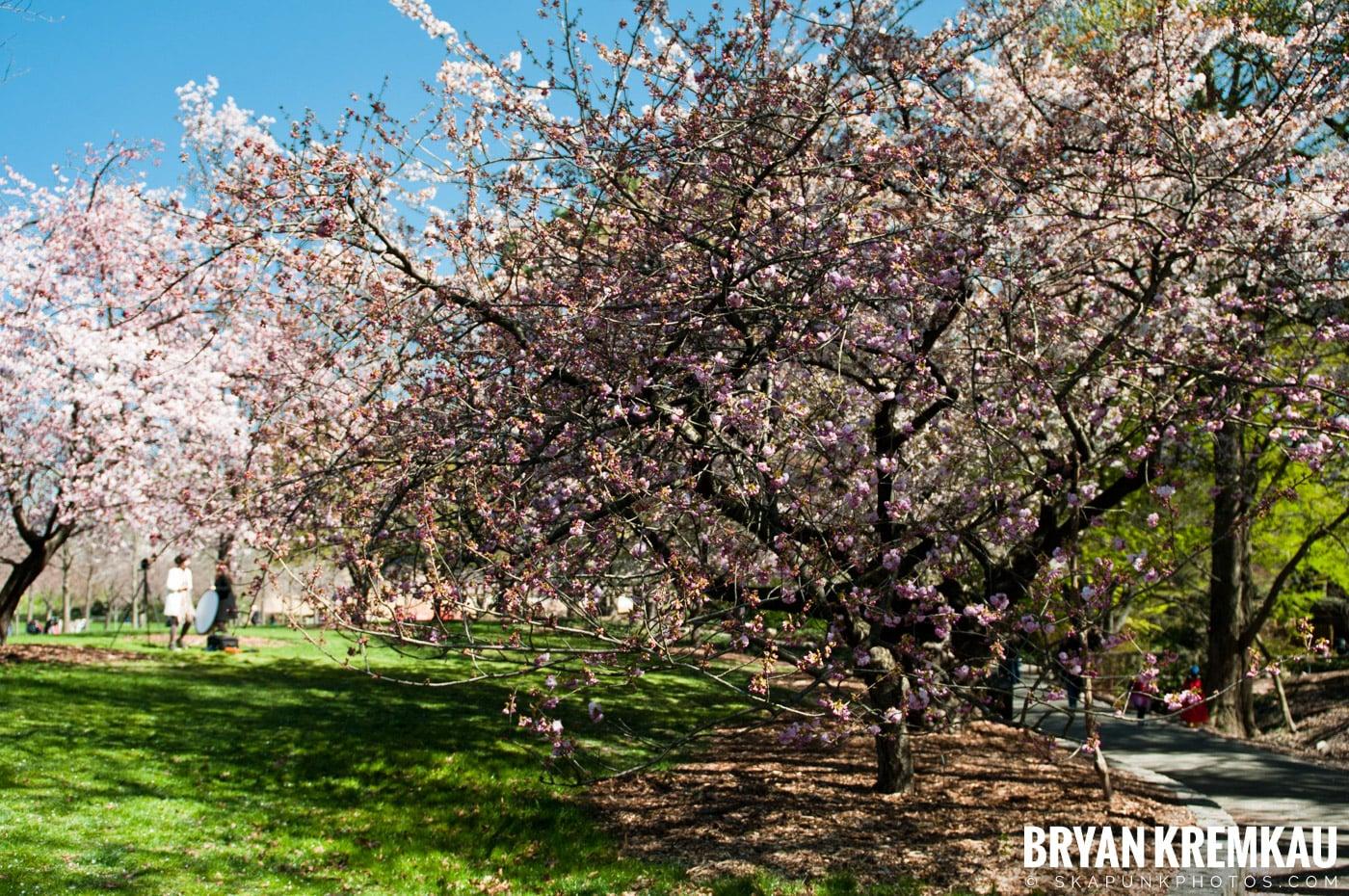 Brooklyn Botanic Garden & Prospect Park Zoo @ Brooklyn, NY - 4.6.12 (66)