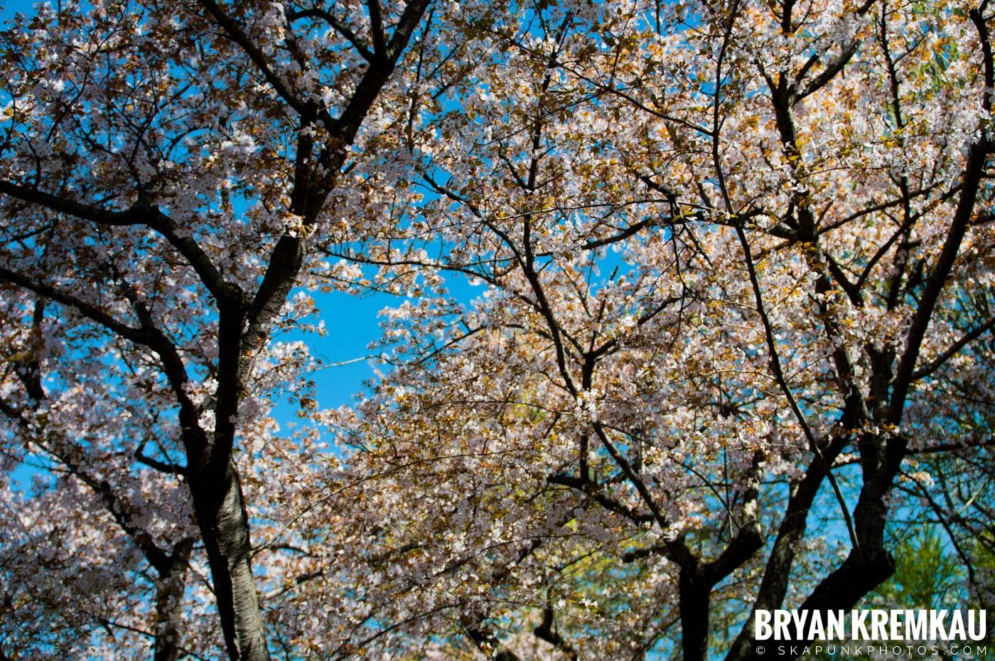 Brooklyn Botanic Garden & Prospect Park Zoo @ Brooklyn, NY - 4.6.12 (64)