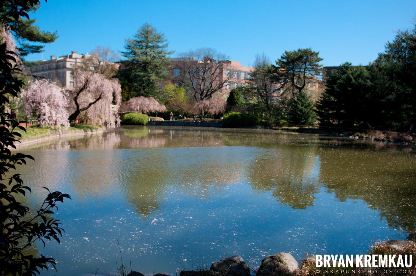 Brooklyn Botanic Garden & Prospect Park Zoo @ Brooklyn, NY - 4.6.12 (61)