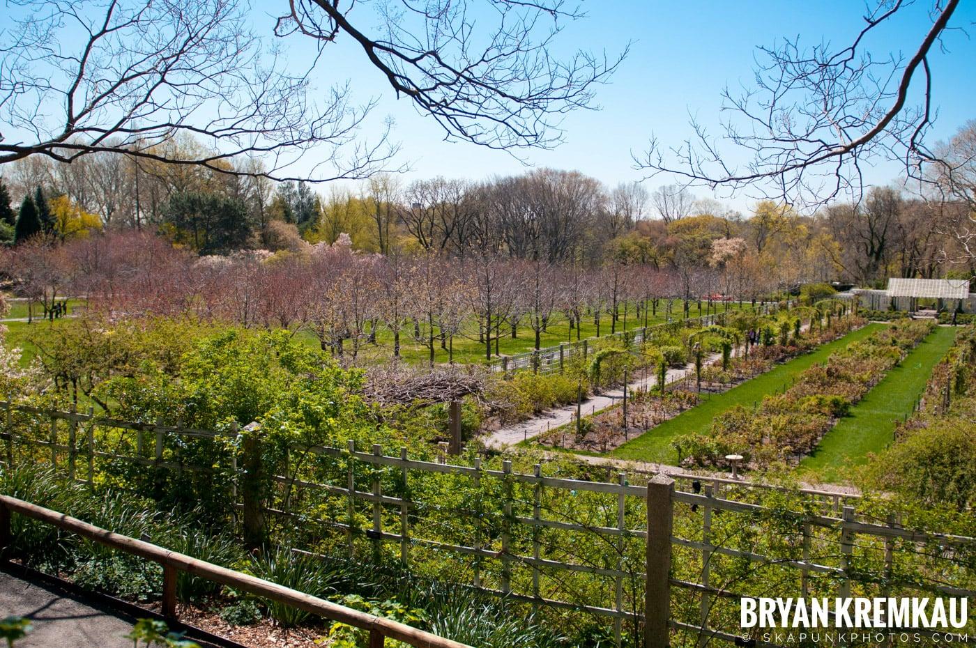 Brooklyn Botanic Garden & Prospect Park Zoo @ Brooklyn, NY - 4.6.12 (53)