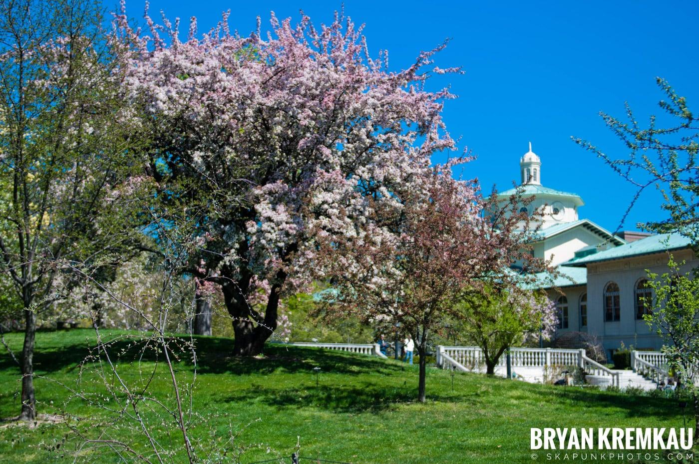 Brooklyn Botanic Garden & Prospect Park Zoo @ Brooklyn, NY - 4.6.12 (51)