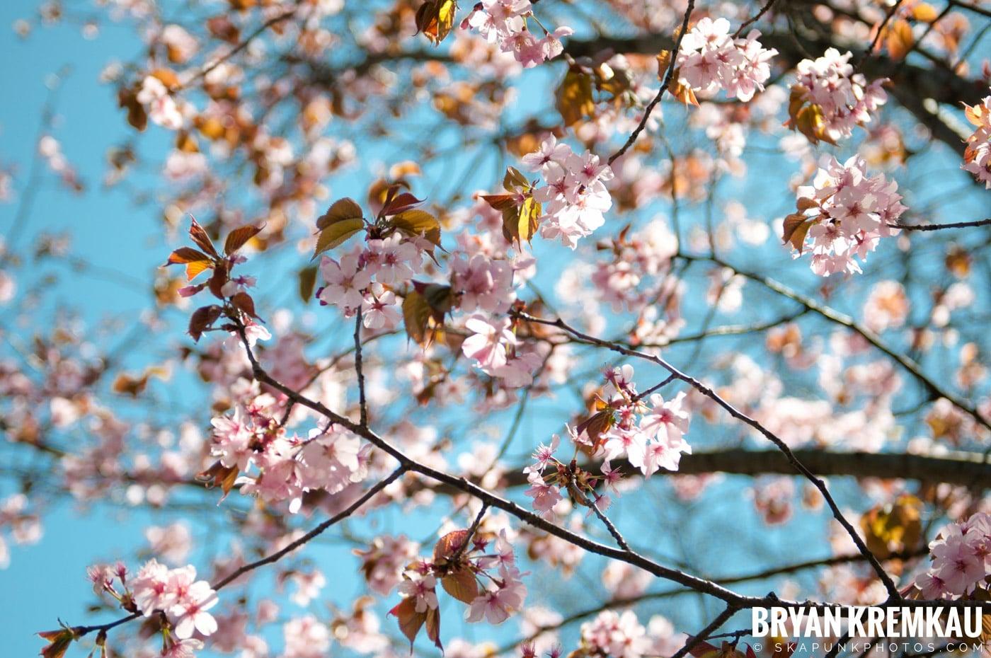 Brooklyn Botanic Garden & Prospect Park Zoo @ Brooklyn, NY - 4.6.12 (50)