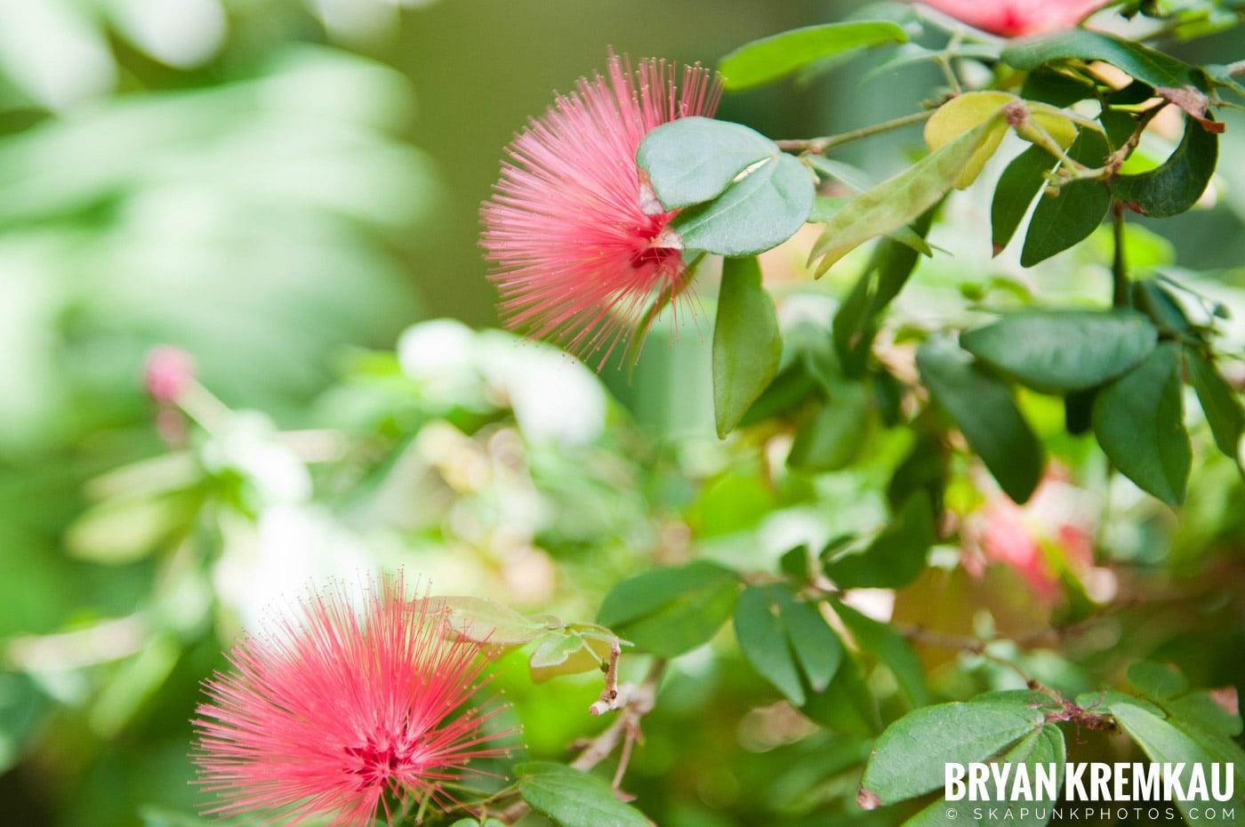 Brooklyn Botanic Garden & Prospect Park Zoo @ Brooklyn, NY - 4.6.12 (48)
