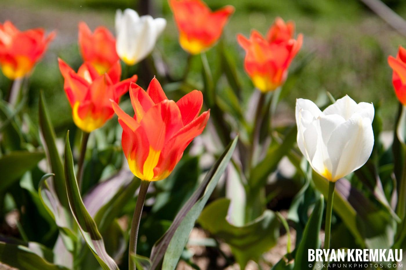 Brooklyn Botanic Garden & Prospect Park Zoo @ Brooklyn, NY - 4.6.12 (39)