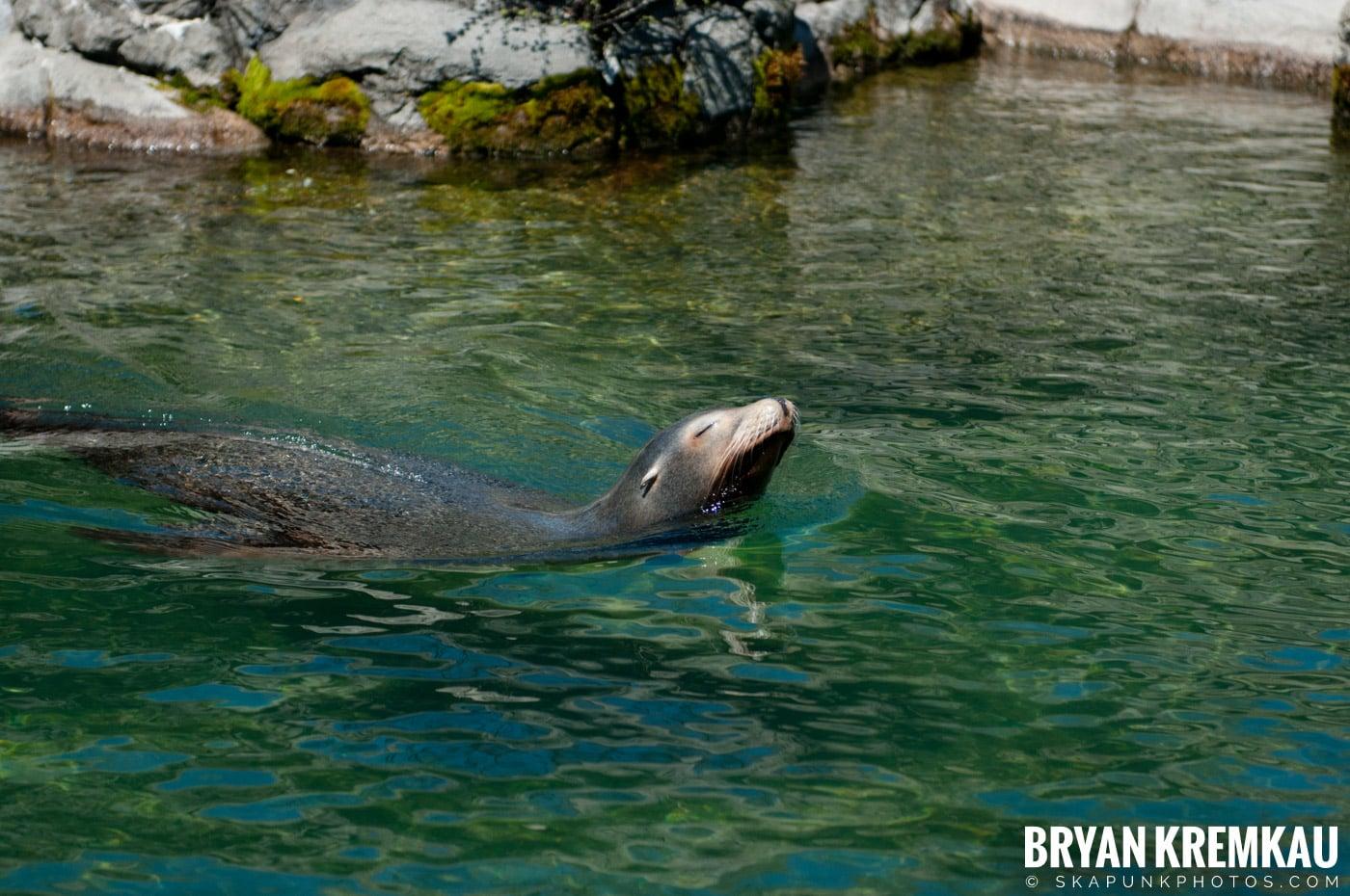 Brooklyn Botanic Garden & Prospect Park Zoo @ Brooklyn, NY - 4.6.12 (36)