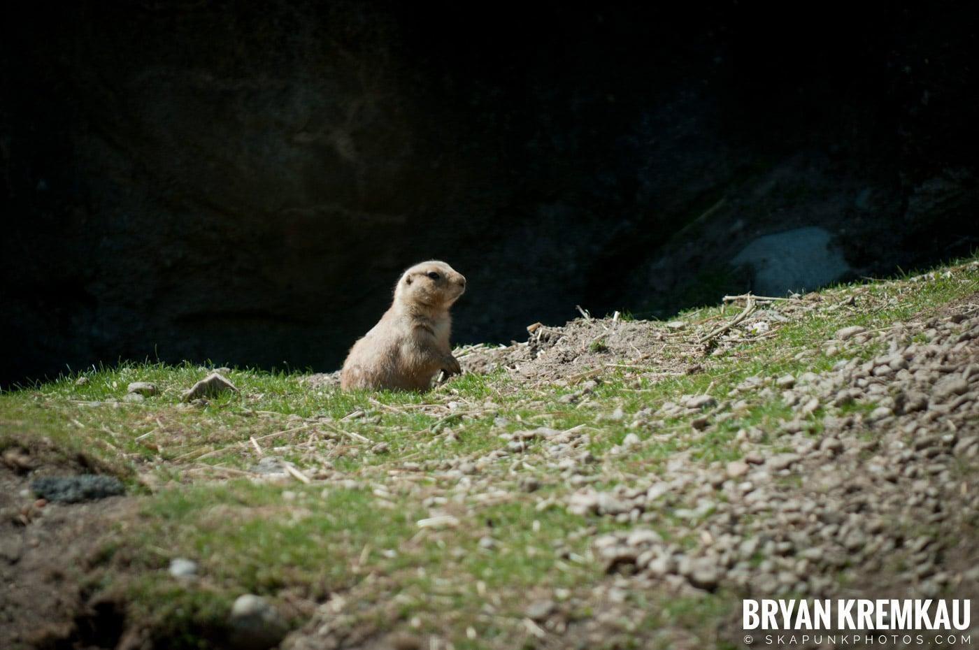 Brooklyn Botanic Garden & Prospect Park Zoo @ Brooklyn, NY - 4.6.12 (34)