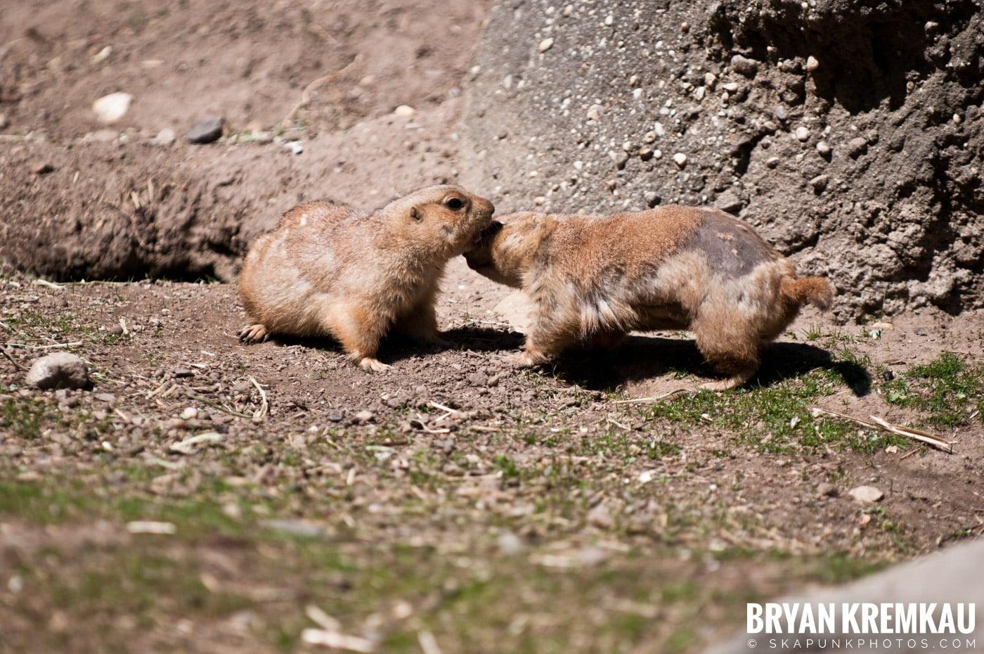 Brooklyn Botanic Garden & Prospect Park Zoo @ Brooklyn, NY - 4.6.12 (29)