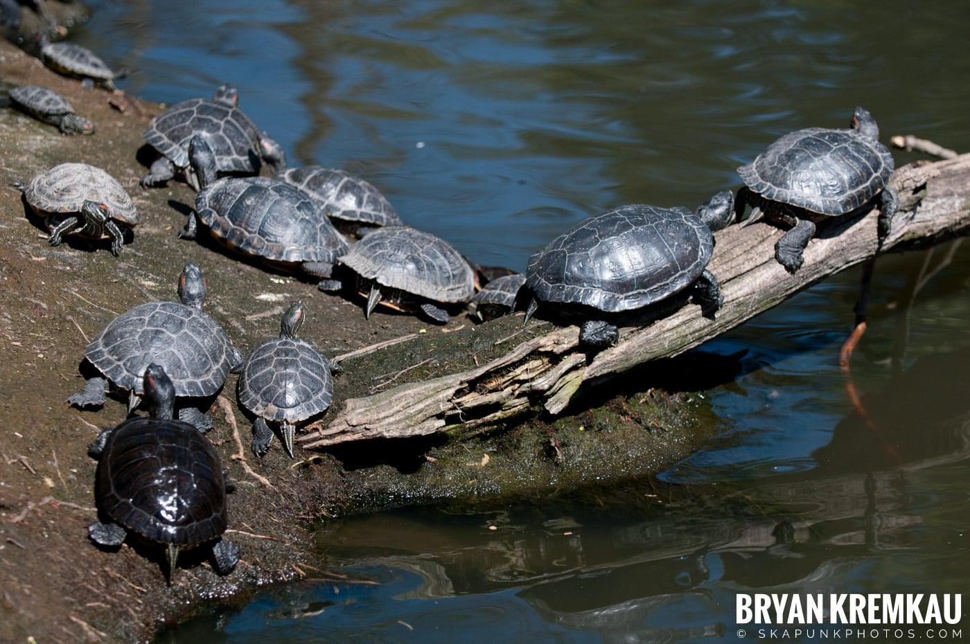 Brooklyn Botanic Garden & Prospect Park Zoo @ Brooklyn, NY - 4.6.12 (28)