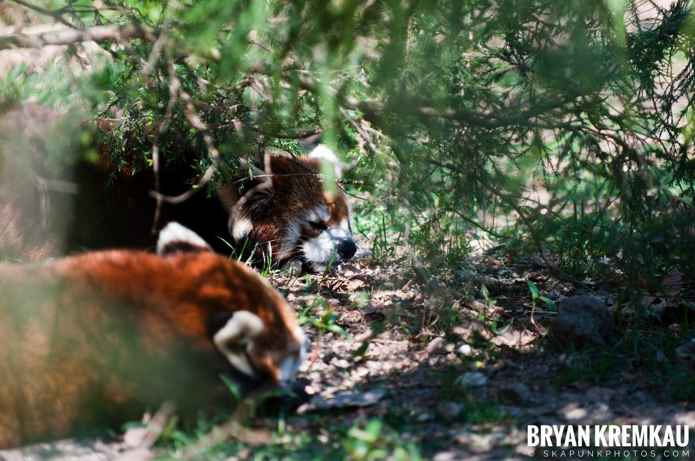 Brooklyn Botanic Garden & Prospect Park Zoo @ Brooklyn, NY - 4.6.12 (23)