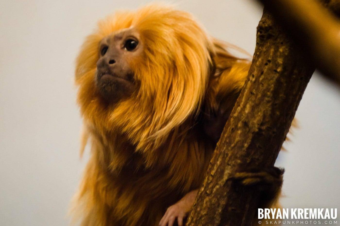 Brooklyn Botanic Garden & Prospect Park Zoo @ Brooklyn, NY - 4.6.12 (21)