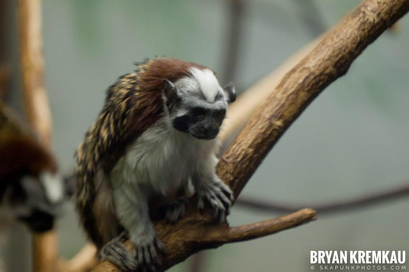 Brooklyn Botanic Garden & Prospect Park Zoo @ Brooklyn, NY - 4.6.12 (19)