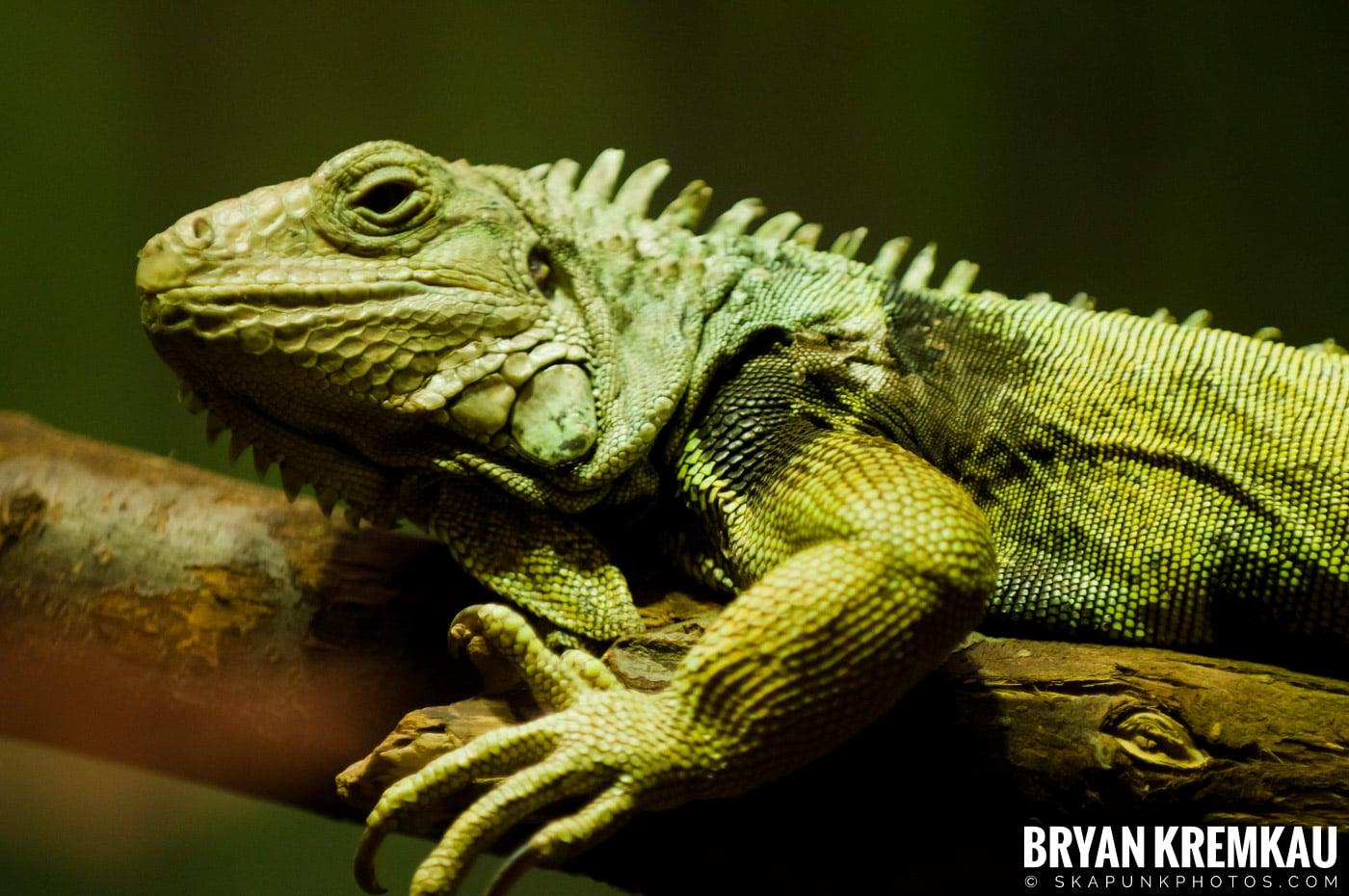 Brooklyn Botanic Garden & Prospect Park Zoo @ Brooklyn, NY - 4.6.12 (18)