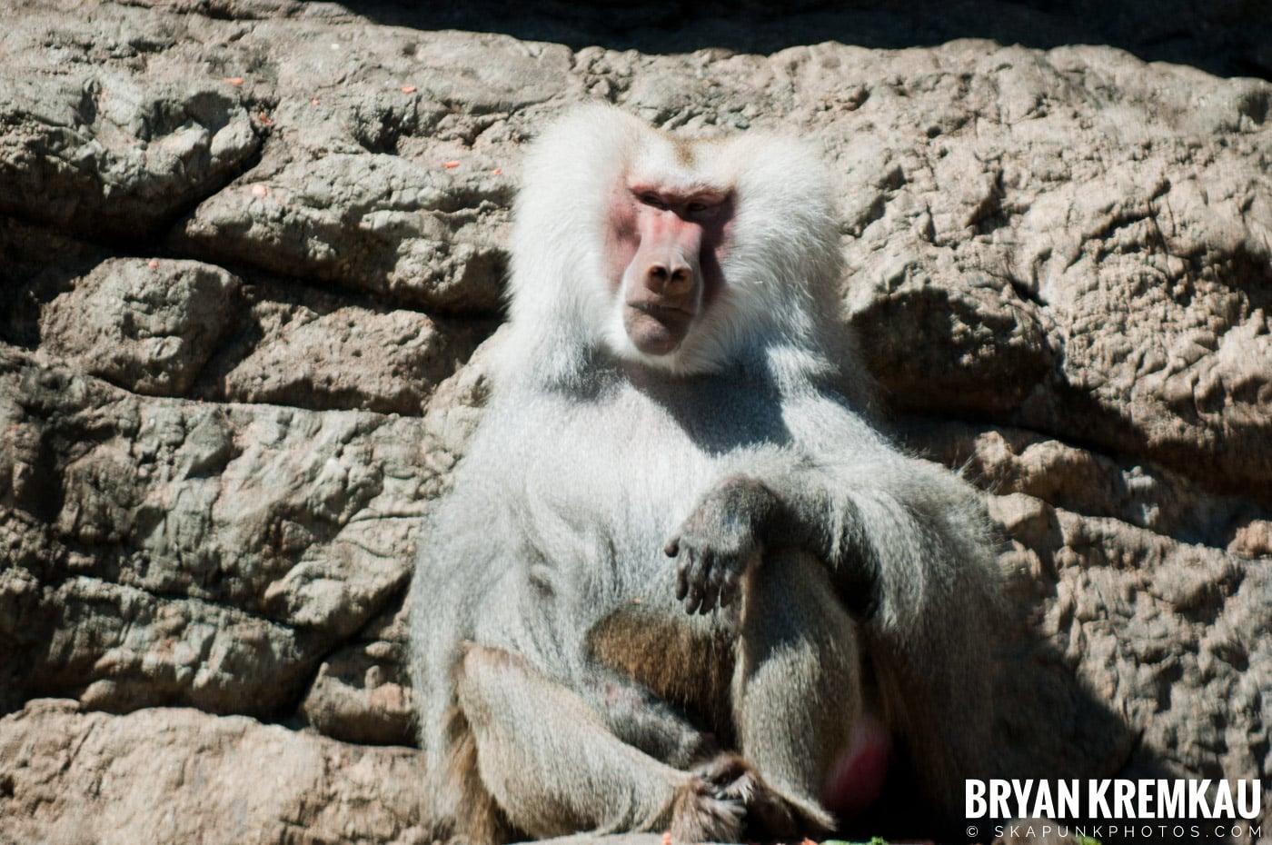 Brooklyn Botanic Garden & Prospect Park Zoo @ Brooklyn, NY - 4.6.12 (17)