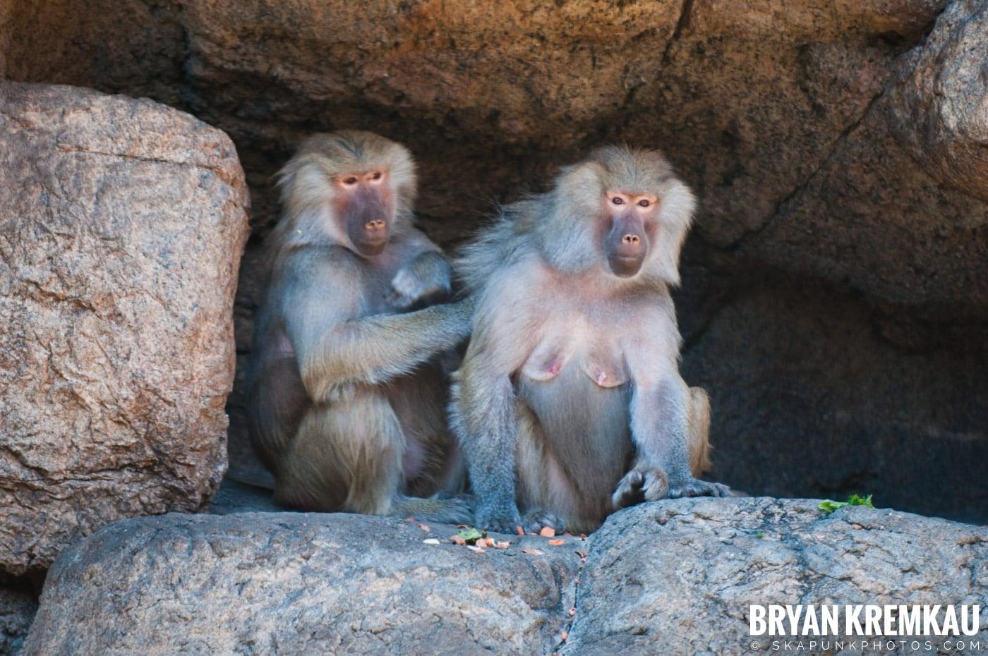 Brooklyn Botanic Garden & Prospect Park Zoo @ Brooklyn, NY - 4.6.12 (16)