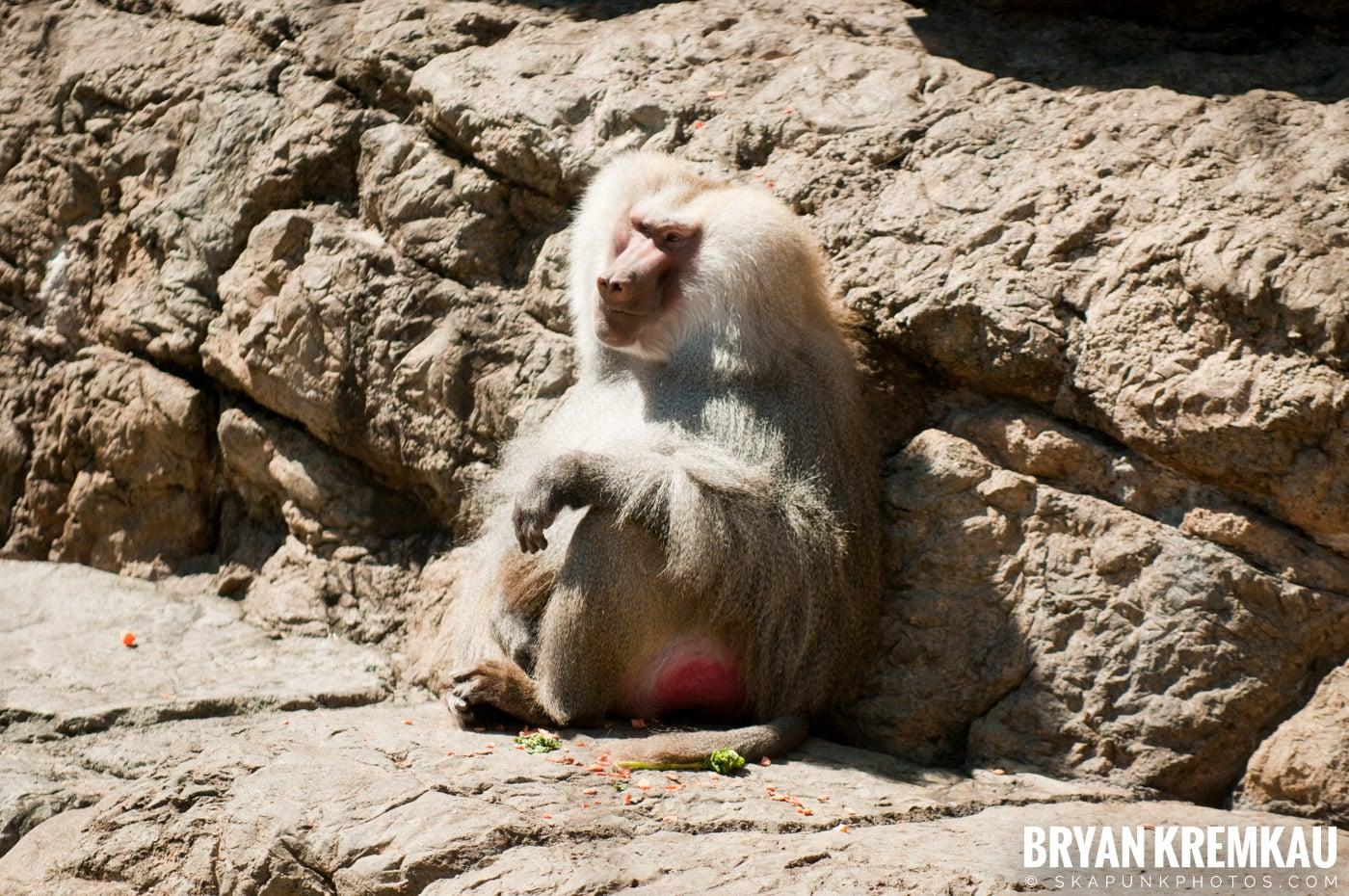 Brooklyn Botanic Garden & Prospect Park Zoo @ Brooklyn, NY - 4.6.12 (15)