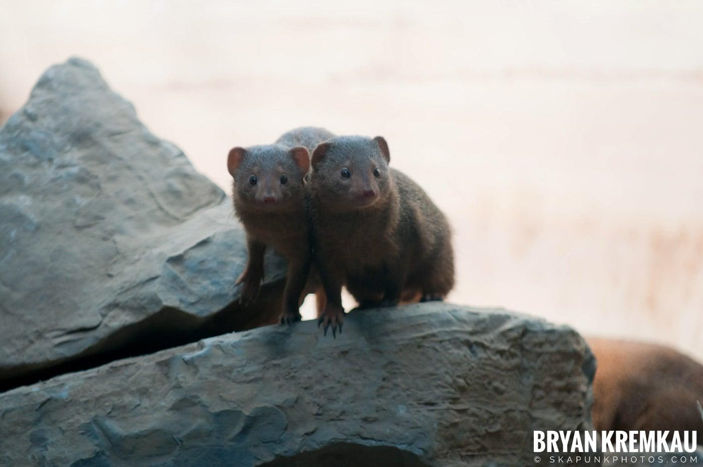 Brooklyn Botanic Garden & Prospect Park Zoo @ Brooklyn, NY - 4.6.12 (11)