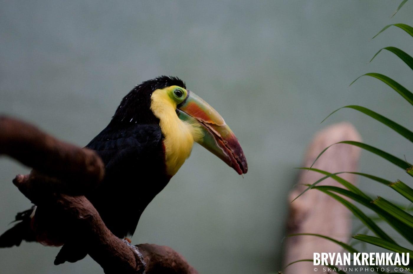 Brooklyn Botanic Garden & Prospect Park Zoo @ Brooklyn, NY - 4.6.12 (7)