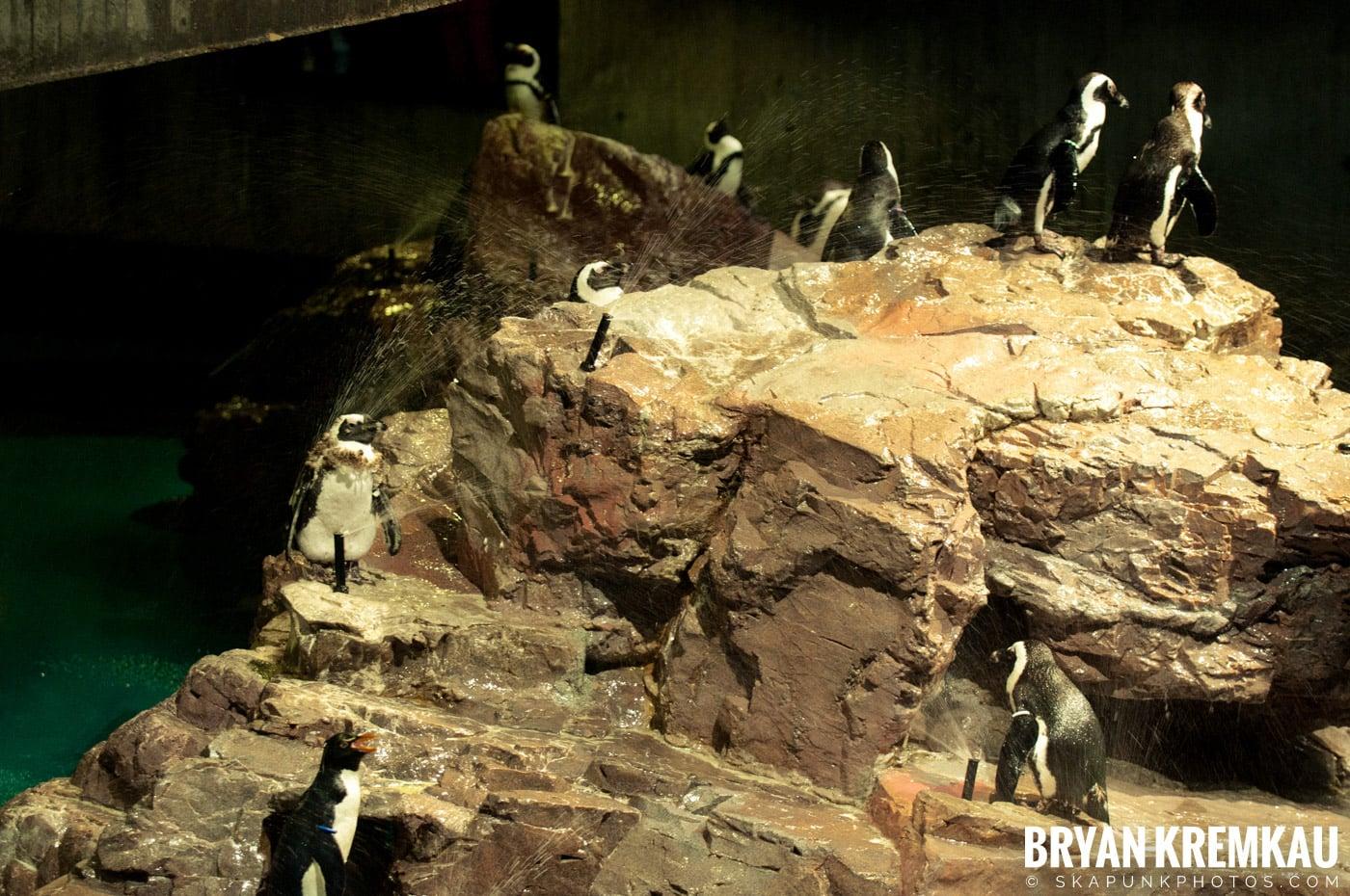 New England Aquarium @ Boston, MA - 6.2.12 (32)