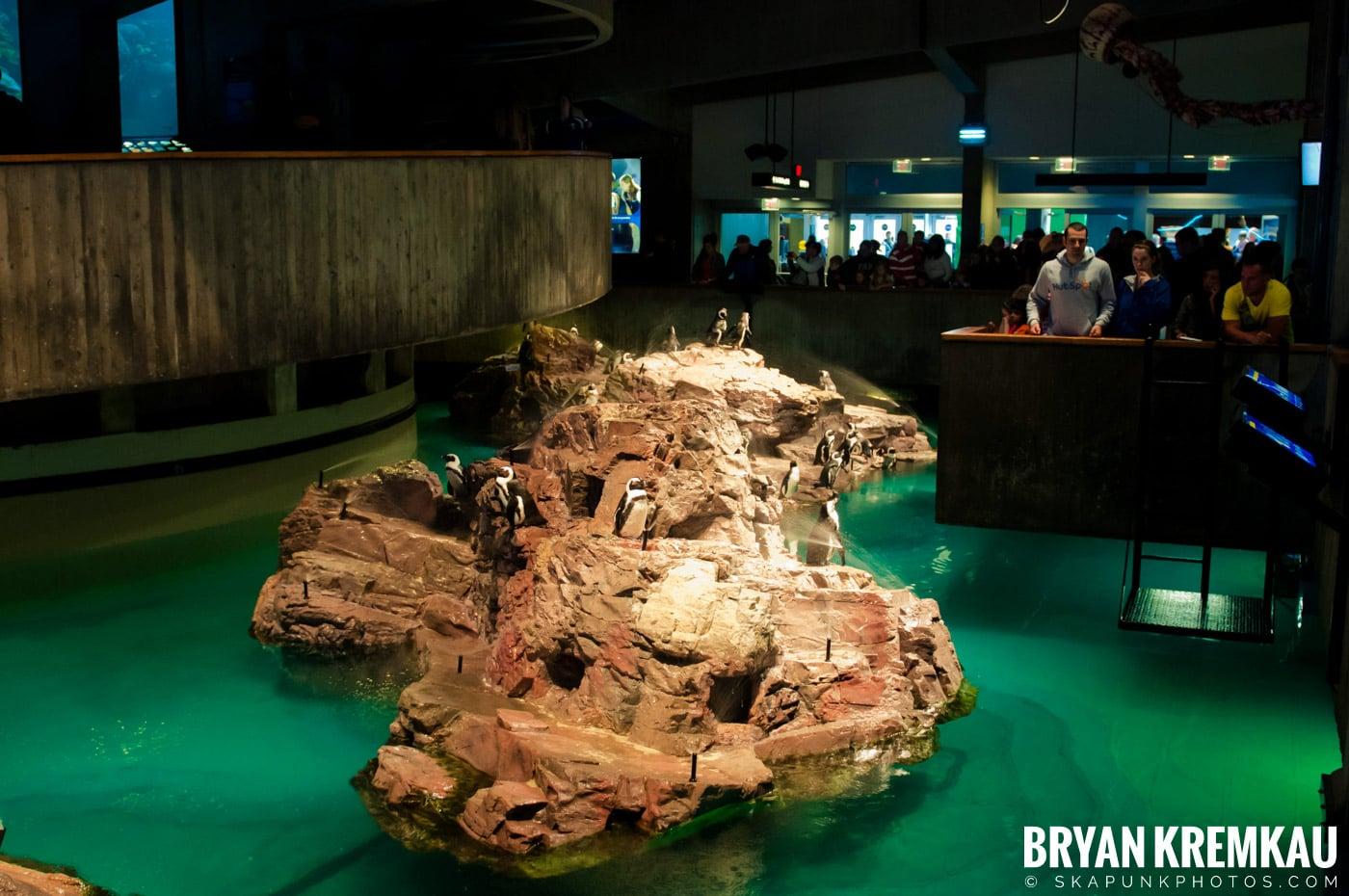 New England Aquarium @ Boston, MA - 6.2.12 (31)