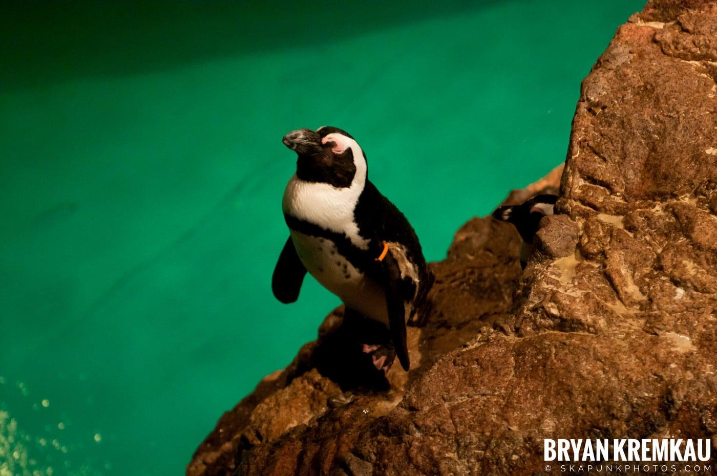 New England Aquarium @ Boston, MA - 6.2.12 (30)