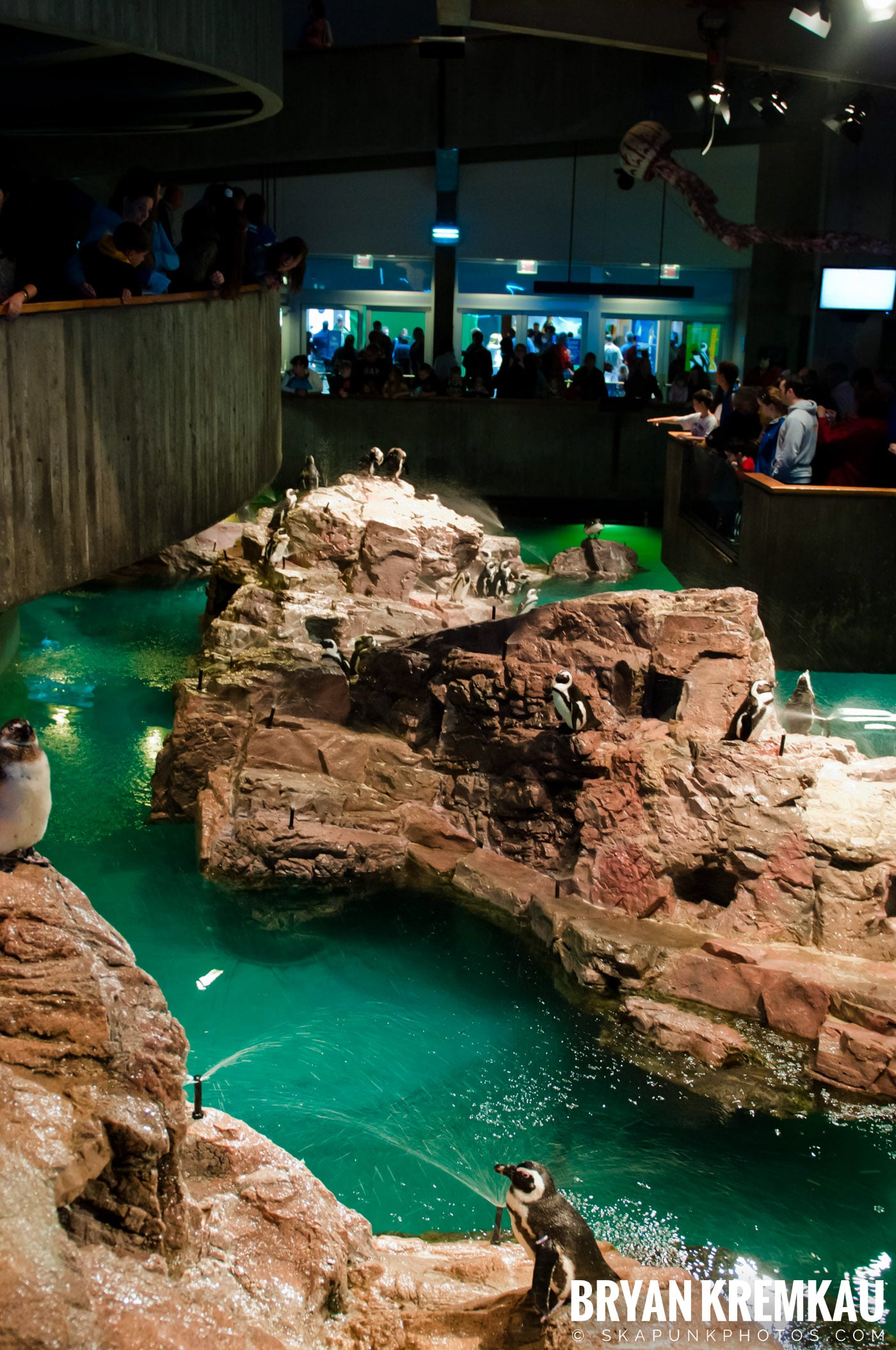 New England Aquarium @ Boston, MA - 6.2.12 (29)