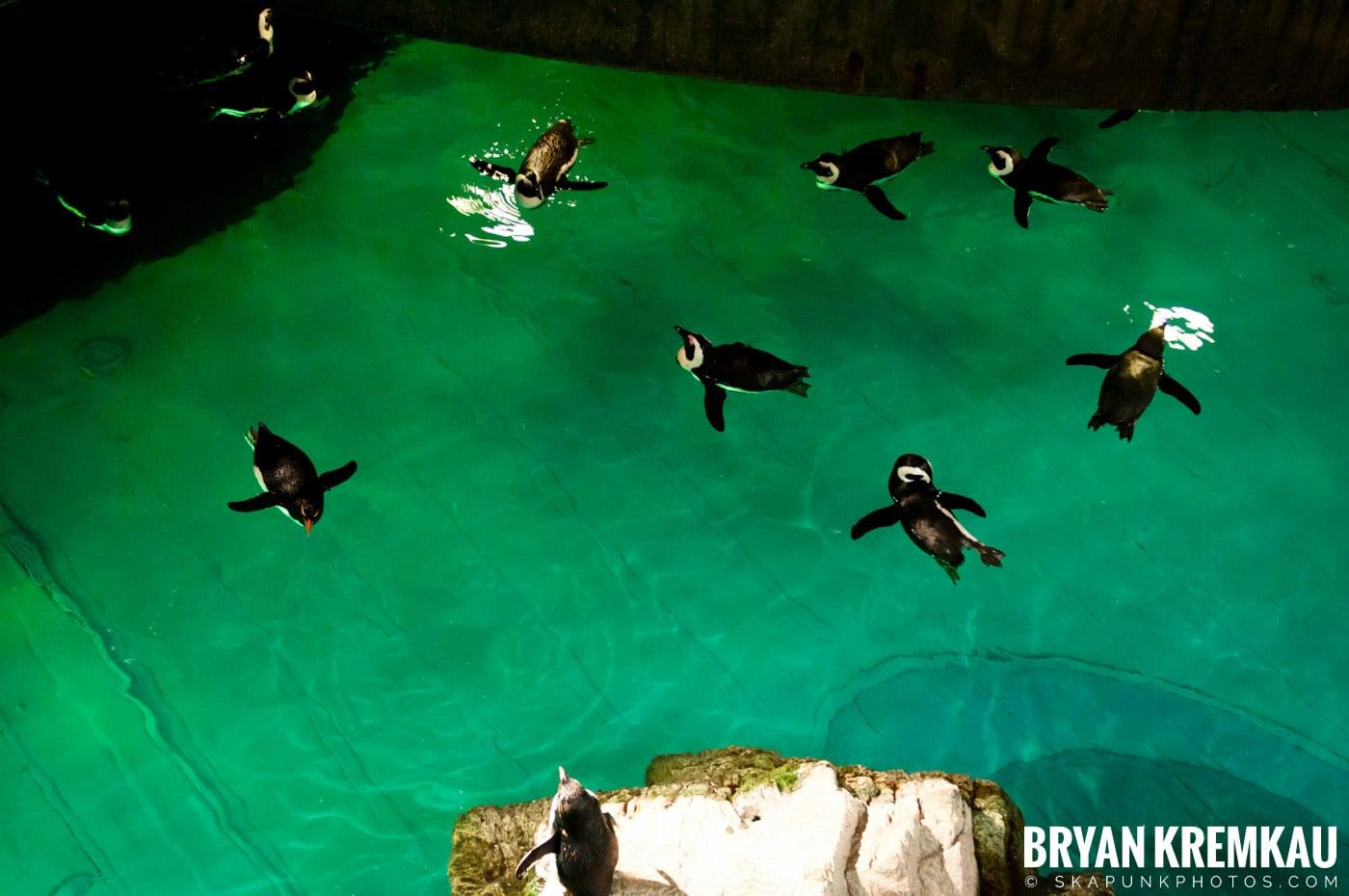 New England Aquarium @ Boston, MA - 6.2.12 (28)