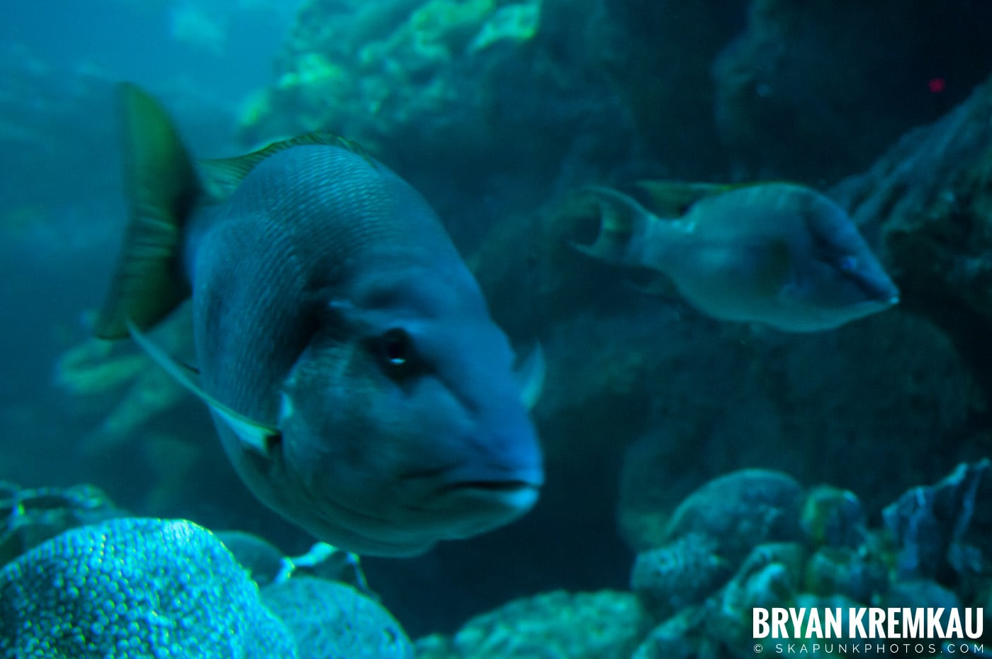 New England Aquarium @ Boston, MA - 6.2.12 (27)