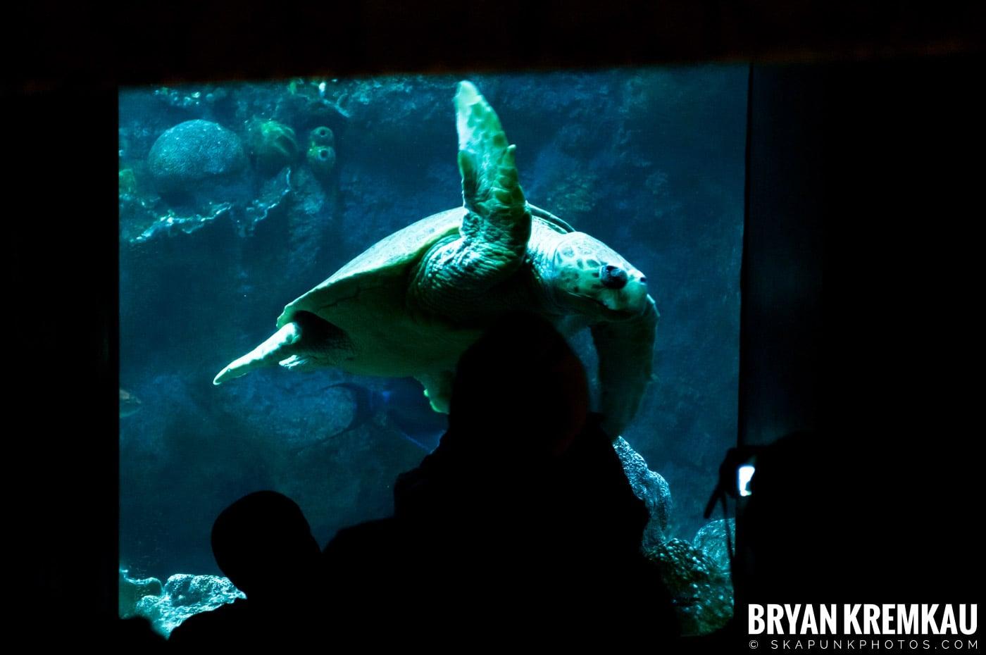 New England Aquarium @ Boston, MA - 6.2.12 (25)