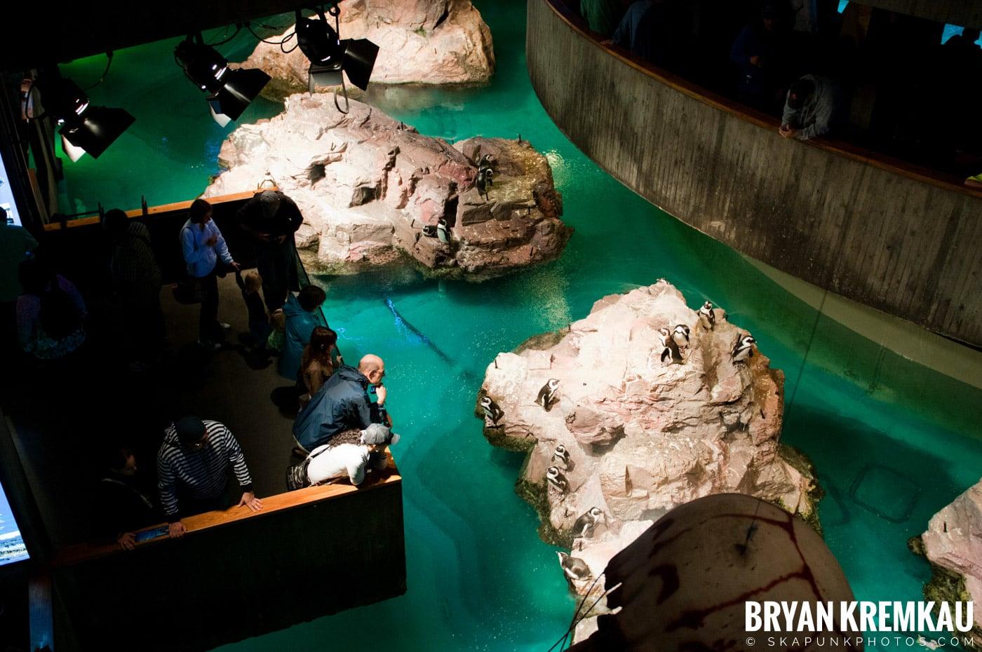 New England Aquarium @ Boston, MA - 6.2.12 (23)