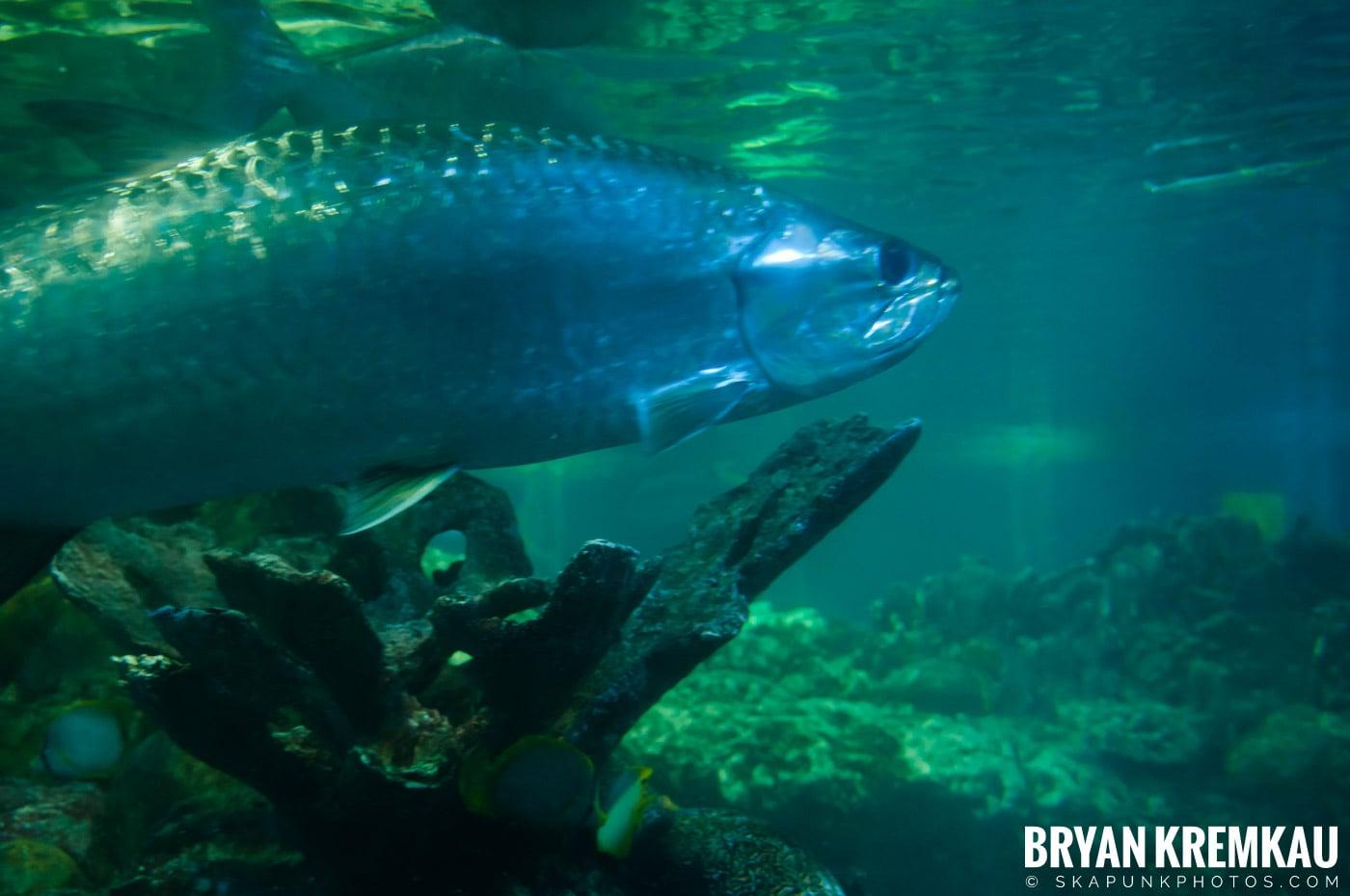 New England Aquarium @ Boston, MA - 6.2.12 (21)