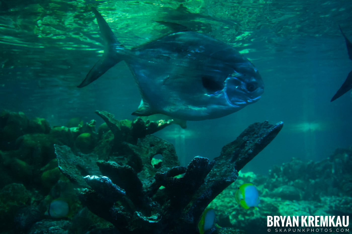 New England Aquarium @ Boston, MA - 6.2.12 (20)