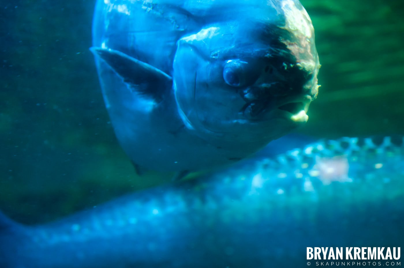 New England Aquarium @ Boston, MA - 6.2.12 (19)
